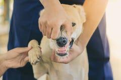L'adolescente sta massaggiando il suo cane marrone fotografia stock
