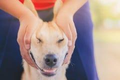 L'adolescente sta massaggiando il suo cane marrone immagine stock libera da diritti