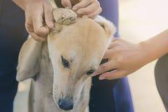 L'adolescente sta massaggiando il suo cane marrone fotografia stock libera da diritti