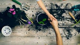 L'adulte en gros plan se serrant la main après plantation fleurit dans un pot Concept des jeunes plantes banque de vidéos