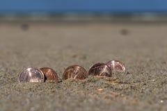 L'affare conia alla festa nella sabbia sulla spiaggia, Mare del Nord Fotografie Stock Libere da Diritti