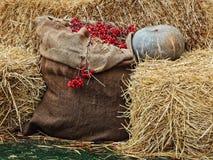 L'affichage de thanksgiving du potiron sur des piles de foin et la toile de jute renvoient des WI Images libres de droits