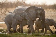 L'Africa Fotografie Stock