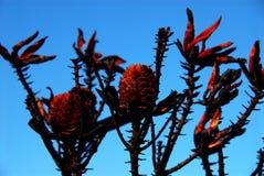 L'Africa ha bruciato Fynbos vicino a Città del Capo, Sudafrica fotografia stock libera da diritti