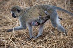 L'Africa Tanzania Fotografie Stock Libere da Diritti