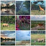 l'afrique Image stock