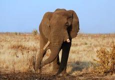 Afrique image stock