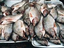 l'Afrique a cultivé la Zambie croissante d'eau douce de tilapia de poissons rapides images stock