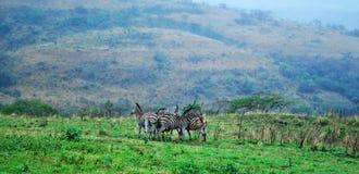 L'Afrique du Sud, réservation de jeu de Hluhluwe Imfolozi, Kwazulu Natal Image libre de droits
