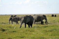 L'Afrique, Kenya, zoologie Photo stock