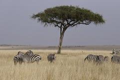l'Afrique réelle Image libre de droits