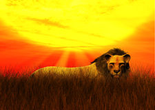 L'Afrique Safari Lion Hidden Savanna Grassland Sun illustration de vecteur