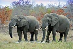 l'Afrique sauvage Photo libre de droits