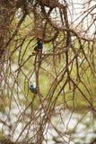 L'Afrique Tanzanie Photo libre de droits