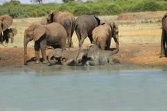 L'Afrique, zoologie Image stock