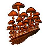 L'agaric de miel de champignon Image stock