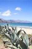L'agave plante l'élevage par l'océan en Sicile, Italie Image stock