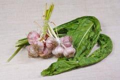 L'aglio ed i verdi freschi Immagini Stock Libere da Diritti