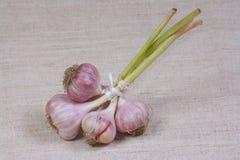 L'aglio fresco dall'orto Fotografie Stock Libere da Diritti