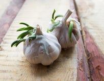 L'aglio si sviluppa Fotografia Stock