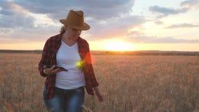 L'agricoltore è su un giacimento di grano al tramonto Controlli la crescita di grano facendo uso di una compressa stock footage