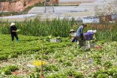 L'agricoltore è sul campo Fotografia Stock Libera da Diritti