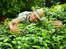 L'agricoltore abbraccia le sue piante Fotografie Stock