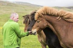 L'agricoltore alimenta i cavalli islandesi Fotografie Stock