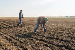 L'agricoltore analizza il seme della soia dopo la semina dei raccolti al campo agricolo Fotografie Stock Libere da Diritti