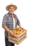 L'agricoltore anziano che tiene una cassa ha riempito di pere Immagini Stock