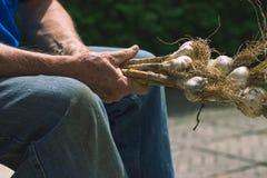 L'agricoltore anziano si riunisce di aglio raccolto Fotografie Stock