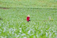 L'agricoltore applica il cereale del fertilizzante Immagine Stock