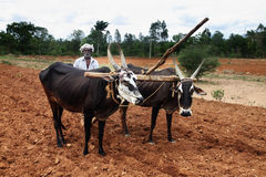 L'agricoltore ara i campi Fotografie Stock Libere da Diritti