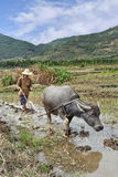 L'agricoltore ara un giacimento del riso su Hainan Fotografia Stock Libera da Diritti