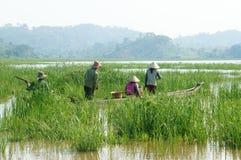 L'agricoltore asiatico, la barca di fila, famiglia, va lavorare Fotografia Stock Libera da Diritti