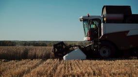 L'agricoltore in associazione attraversa il campo e riunisce il grano archivi video