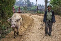 L'agricoltore cammina il suo bufalo dell'albino lungo la strada della montagna Immagini Stock Libere da Diritti