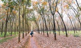 L'agricoltore che guida a casa dopo il lavoro in piantagioni di gomma condisce invece le foglie in autunno Fotografia Stock