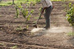 L'agricoltore che nocciole di zappatura i Fotografie Stock Libere da Diritti