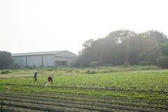 L'agricoltore che sta nell'azienda agricola Fotografie Stock Libere da Diritti