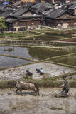 L'agricoltore cinese ara la terra facendo uso di potere del cavallo Fotografia Stock