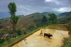 L'agricoltore cinese coltiva l'aratro della terra, facendo uso del potere del patito Immagini Stock