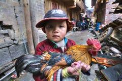 L'agricoltore cinese del ragazzo sta giudicando il gallo painti luminoso e multicolore Fotografie Stock
