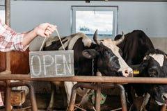 L'agricoltore con aperto firma dentro la stalla Fotografia Stock Libera da Diritti