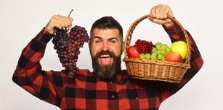 L'agricoltore con il fronte felice presenta le mele, i mirtilli rossi e l'uva matura Immagini Stock