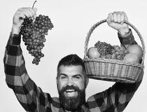L'agricoltore con il fronte felice presenta le mele, i mirtilli rossi e l'uva matura Il tipo con l'uomo del raccolto con la barba Immagini Stock