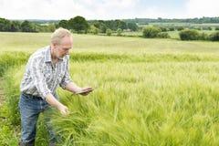 L'agricoltore considera lo schermo della compressa mentre tiene la pianta del grano Fotografie Stock