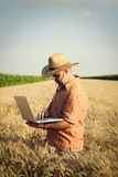 L'agricoltore controlla il grano del grano nel campo Immagini Stock Libere da Diritti