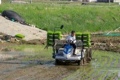L'agricoltore coreano guida il tipo trapiantatrice azionata a motore di guida del riso alla piantina il giovane riso verde sul ca Fotografia Stock