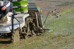 L'agricoltore coreano guida il tipo trapiantatrice azionata a motore di guida del riso alla piantina il giovane riso verde sul ca Immagine Stock